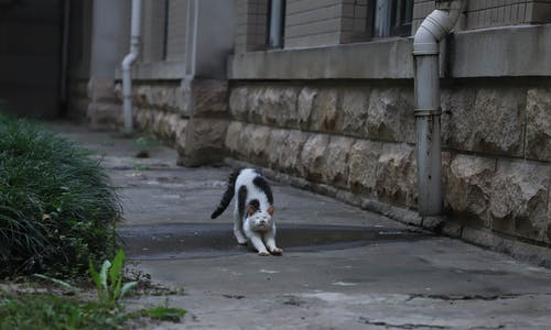 Gratis stockfoto met kat