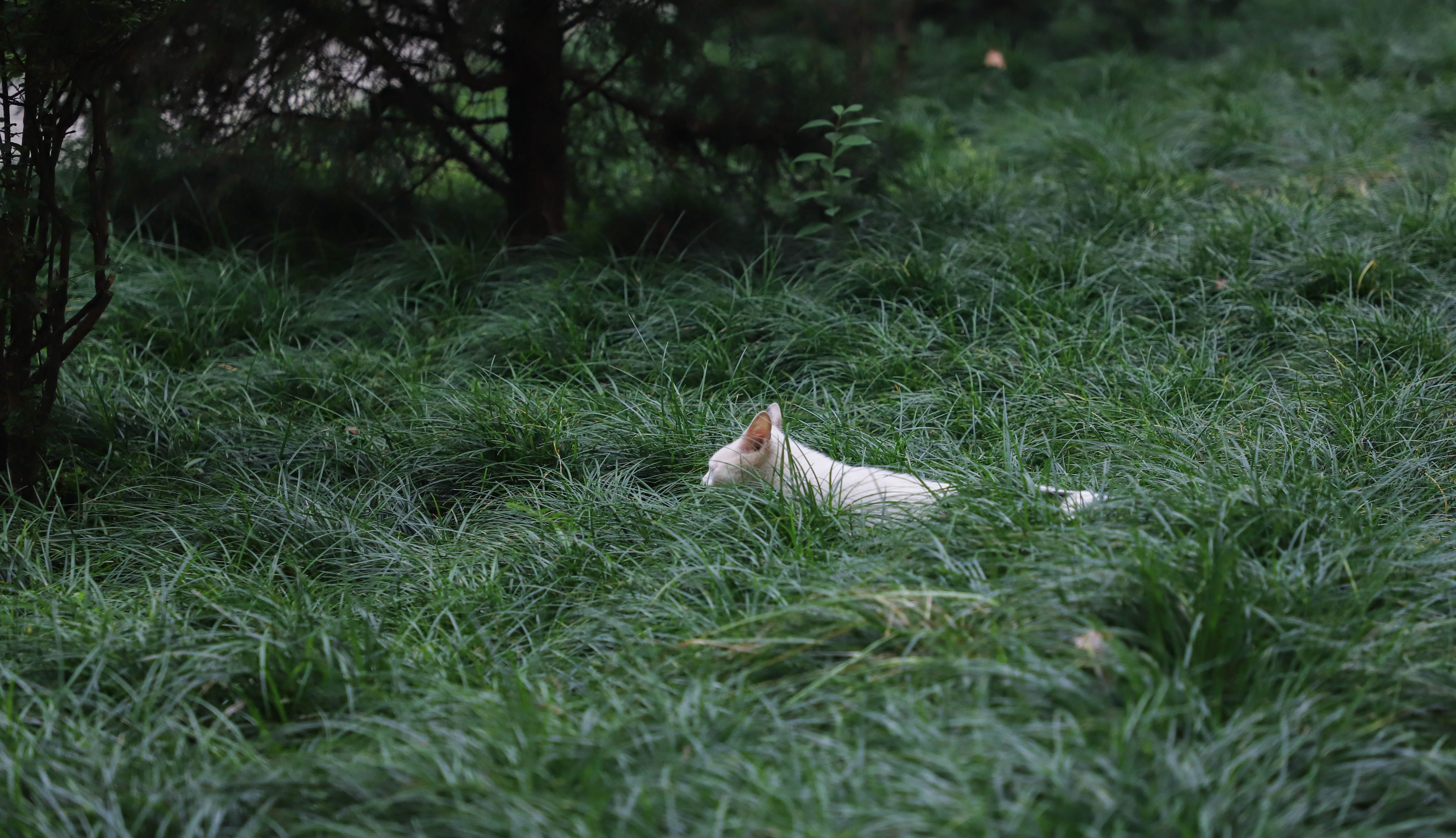 Photo of Cat on Grass