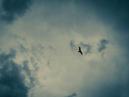 Ảnh lưu trữ miễn phí về Adobe Photoshop, ảnh trừu tượng, Trời nhiều mây, trời xanh