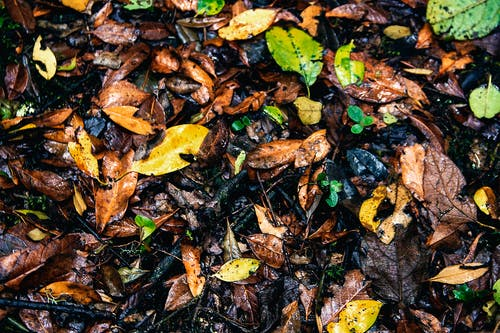 Free stock photo of leafs autumn background