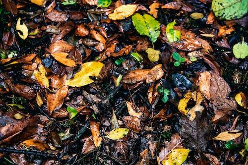Imagine de stoc gratuită din frunze fundal toamna