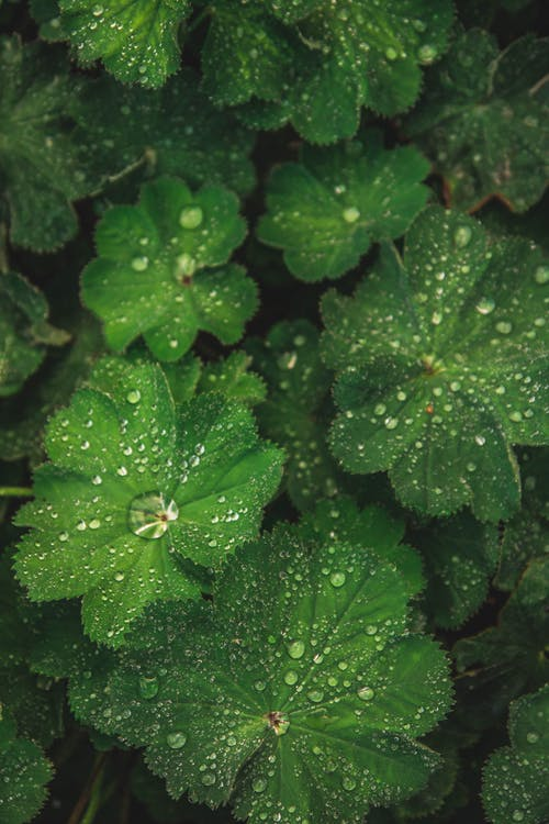 Close-up Photo of Leaves With Droplets