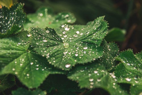 Macro Photography of Leaves With Droplets