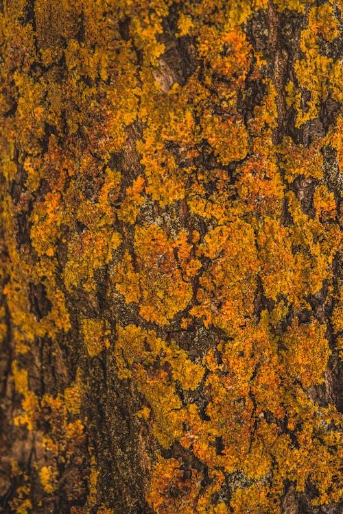 Foto profissional grátis de áspero, bruto, casca, coberto de musgo