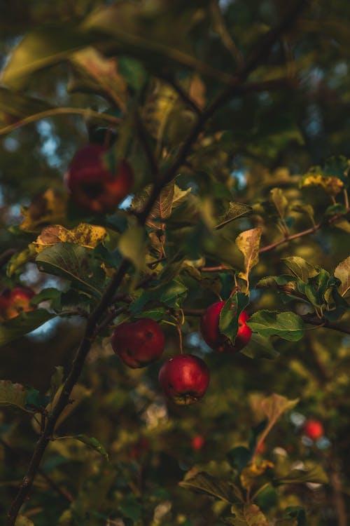 Photos gratuites de arbre, branche, brillant, brouiller