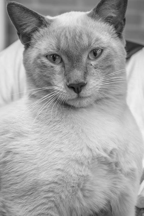 eläin, eläinkuvaus, kissa