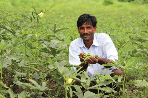Free stock photo of farmer, happiness, maharashtra, pidhamotha