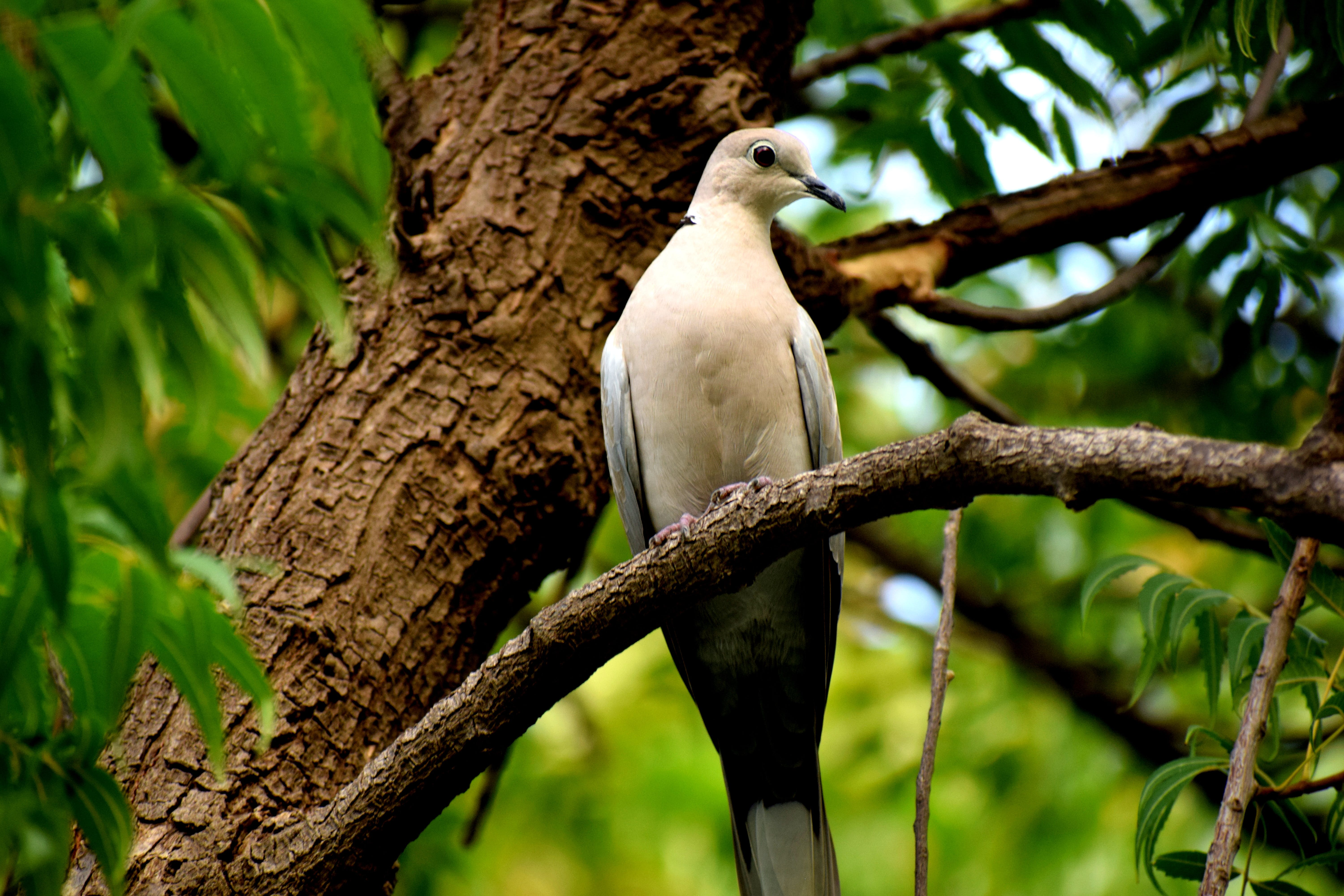 White and Grey Bird Perched on Tree
