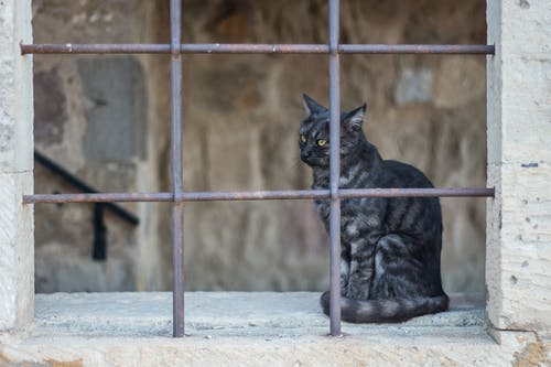 Free stock photo of animal, black cat, cat
