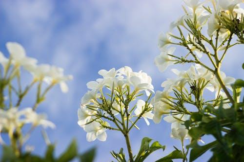 Photos gratuites de fleurir, fleurs, flore, nature