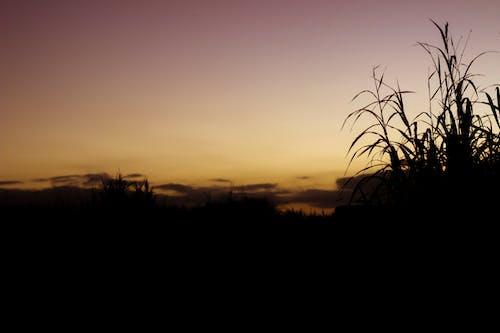 Gratis lagerfoto af skov, skyer, skygger, solnedgang