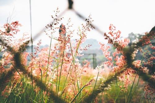 Ảnh lưu trữ miễn phí về cỏ, độ sâu trường ảnh, hàng rào dây xích, hệ thực vật