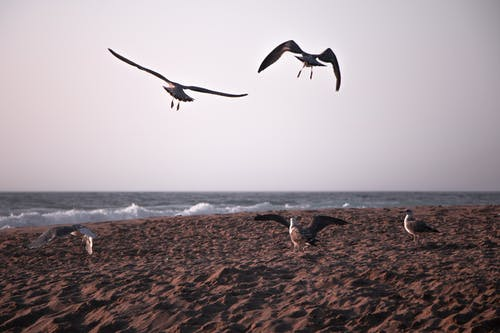 Základová fotografie zdarma na téma křídla, létání, moře, pláž