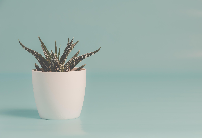 succulent store
