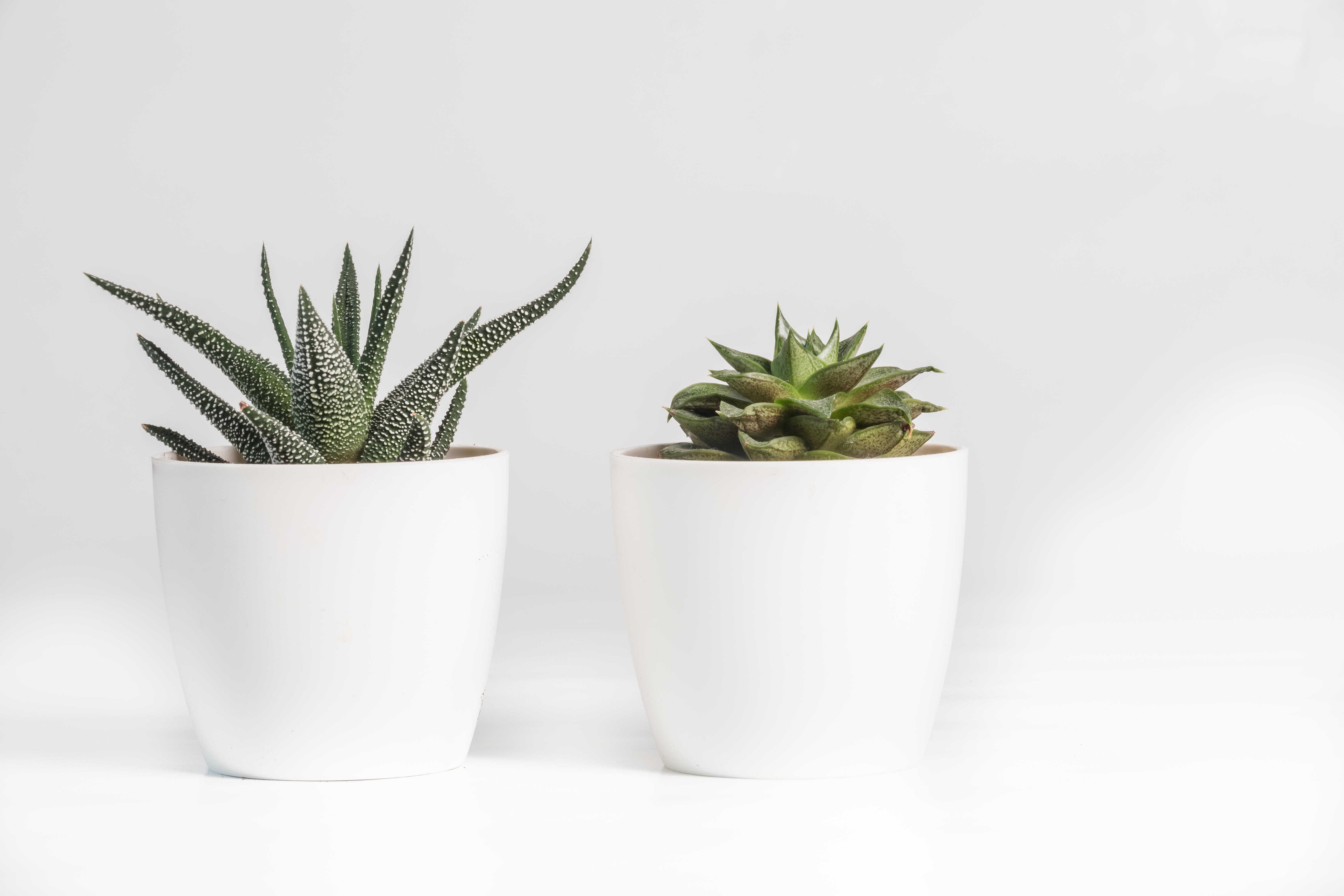 Aloe Vera and Succulent Plant in White Ceramic Pot