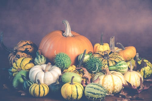 Assorted-colored Pumpkin and Squash Arrangement Wallpaper