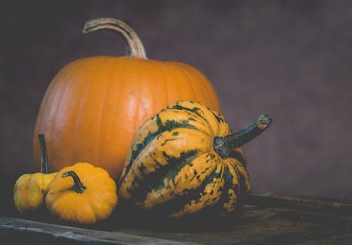 Základová fotografie zdarma na téma čerstvý, dýně, plodiny, sezónní