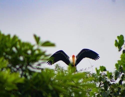Foto d'estoc gratuïta de fotografia de la vida salvatge, grua, jungla, Ocells del paradís