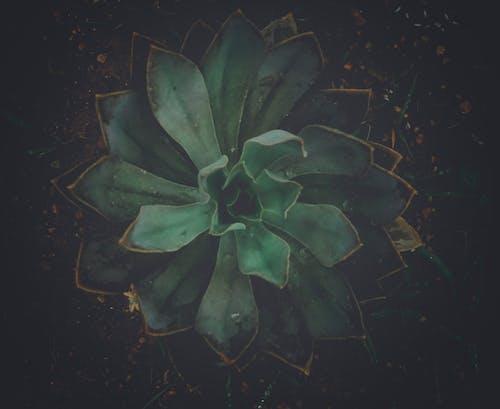 Bahçe, bahçe bitkisi, bitki, bitkibilim içeren Ücretsiz stok fotoğraf