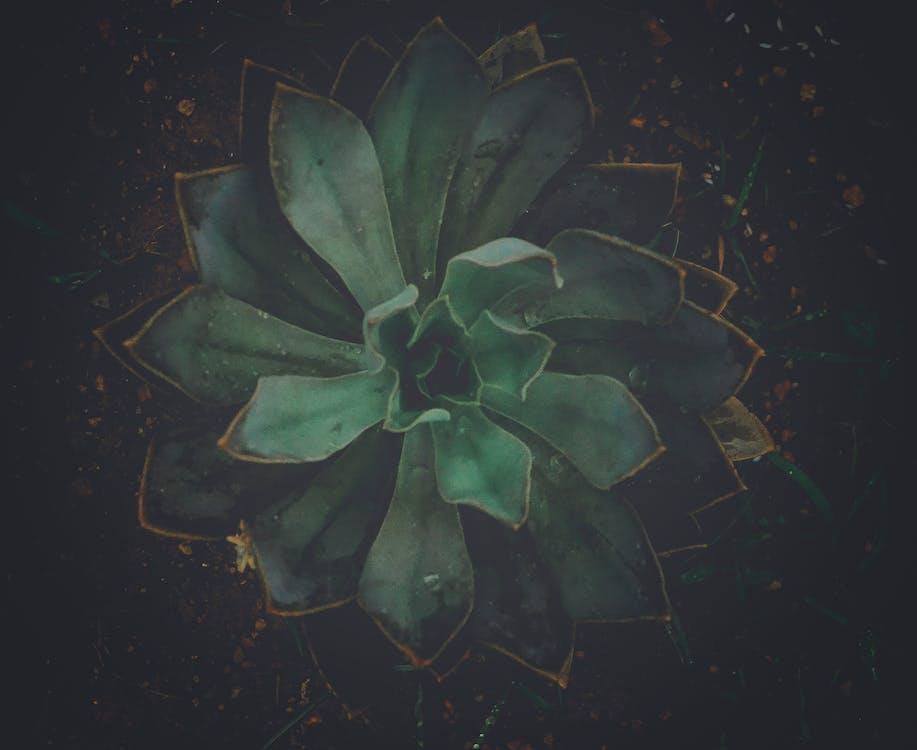 botanikus, gyár, kaktusz