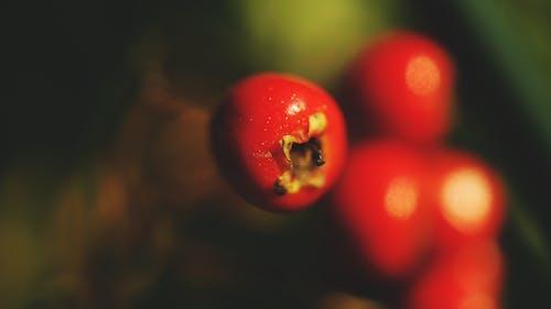 Free stock photo of cherry, close up view, macro