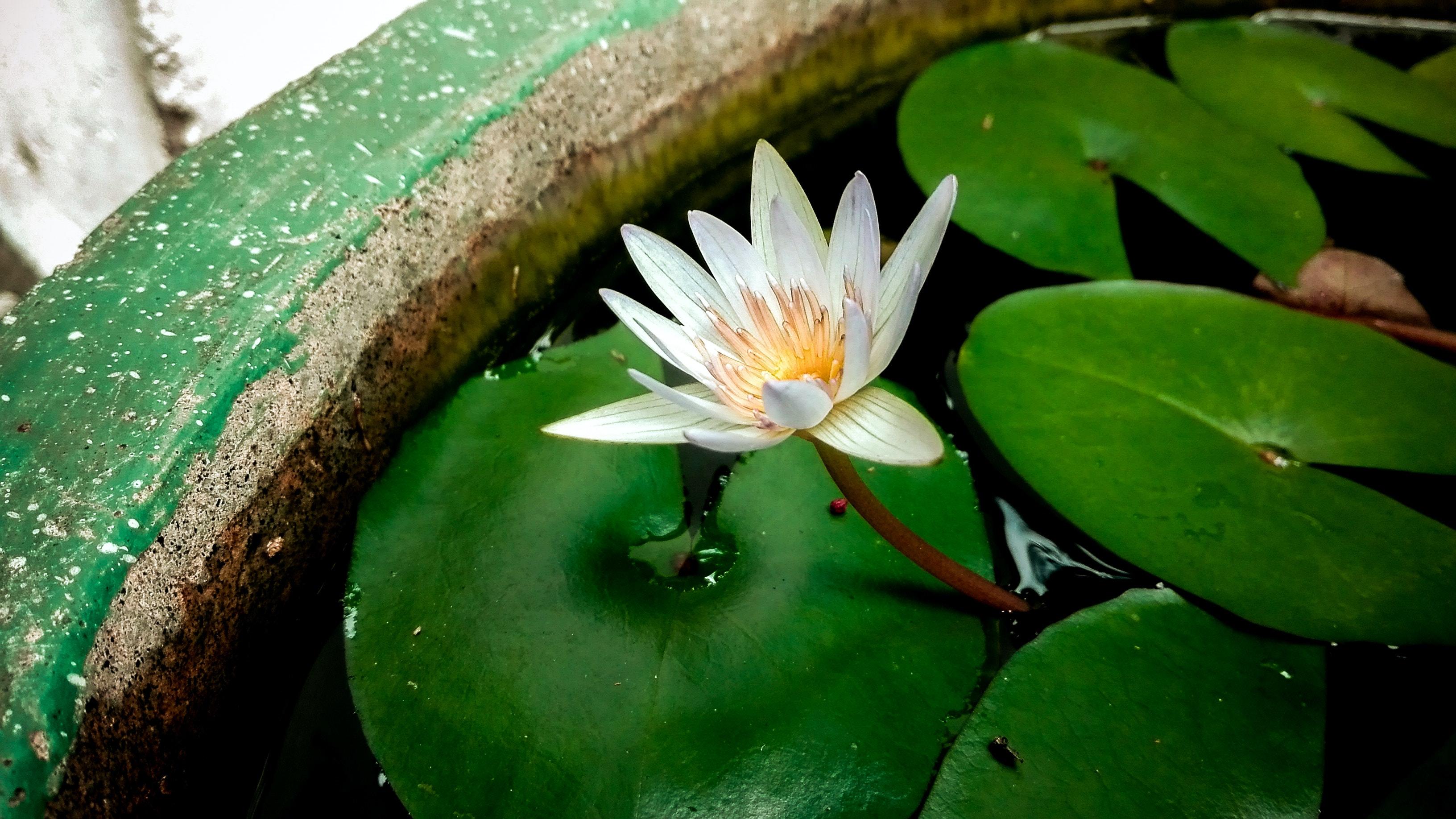 Unduh 7600 Koleksi Gambar Bunga Bakung Yang Indah HD Paling