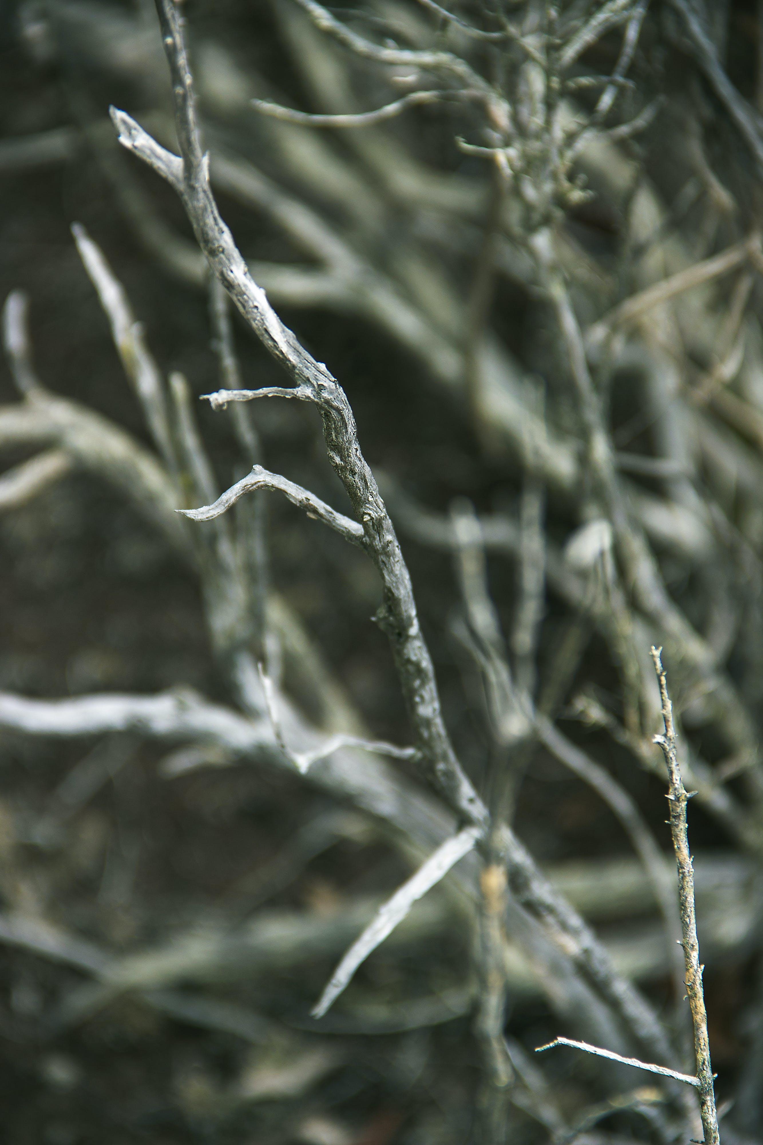 Kostenloses Stock Foto zu betrübt, natur, schwarz und weiß, tot