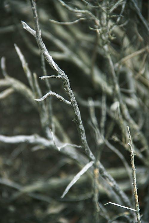 Imagine de stoc gratuită din alb-negru, copac mort, decedat