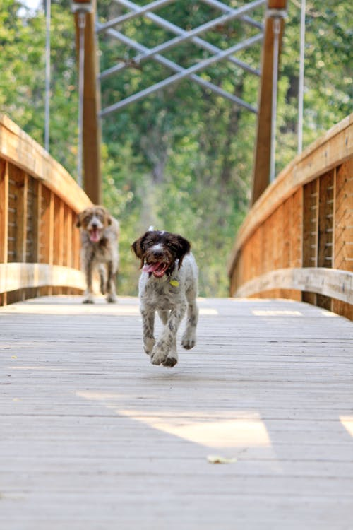 Безкоштовне стокове фото на тему «прийняття, собака, собаки»