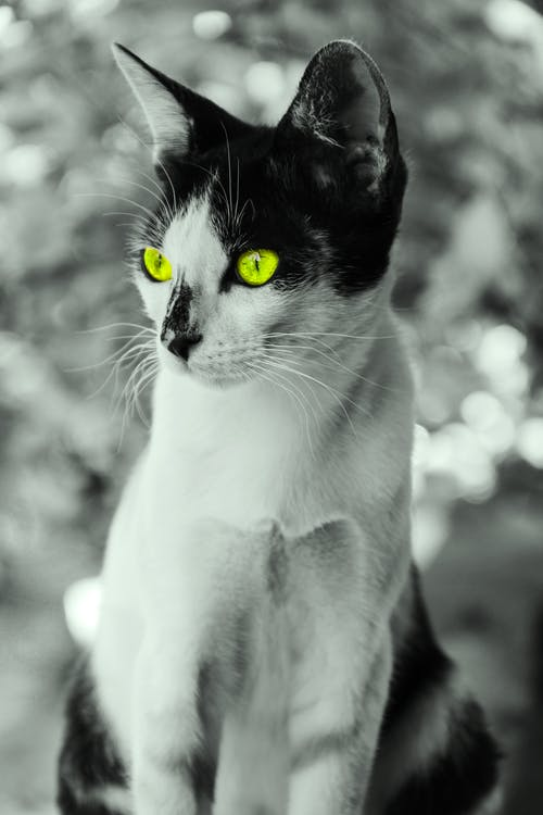 Free stock photo of #animal #cat, #pussycat