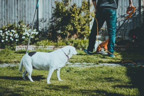 Photo Of Dog on Grass Beside A Man Holding A Grass Cutter