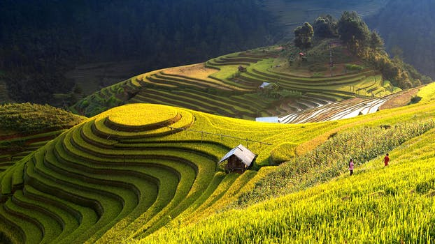 Walk through rice terraces