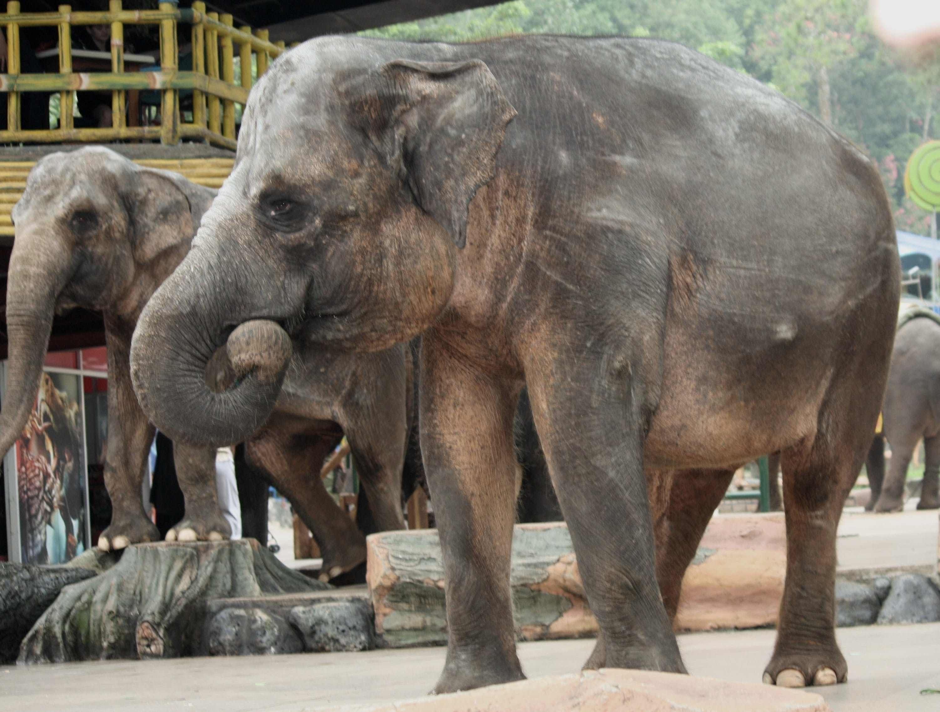 Foto d'estoc gratuïta de animals, elefants