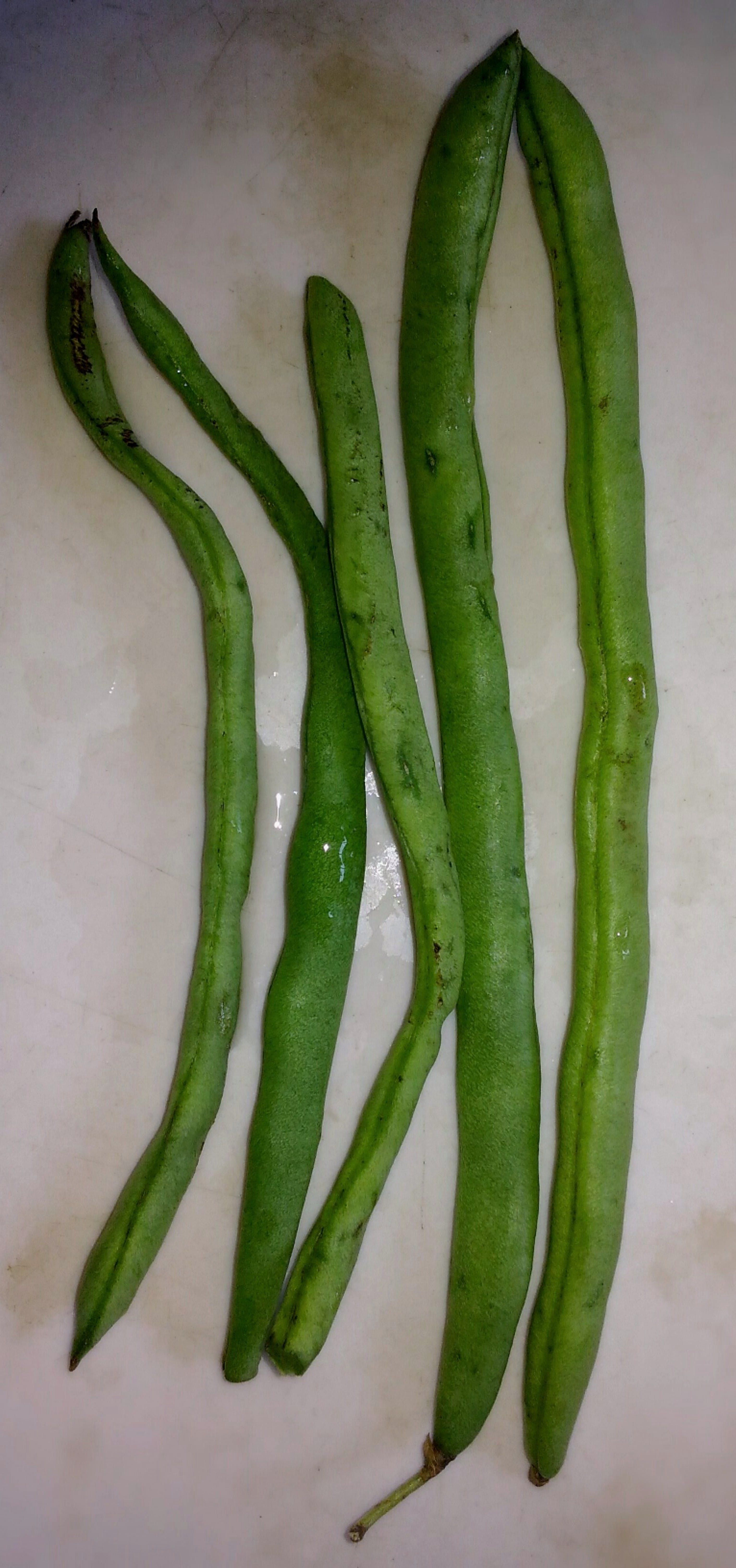 Free stock photo of Long Beans