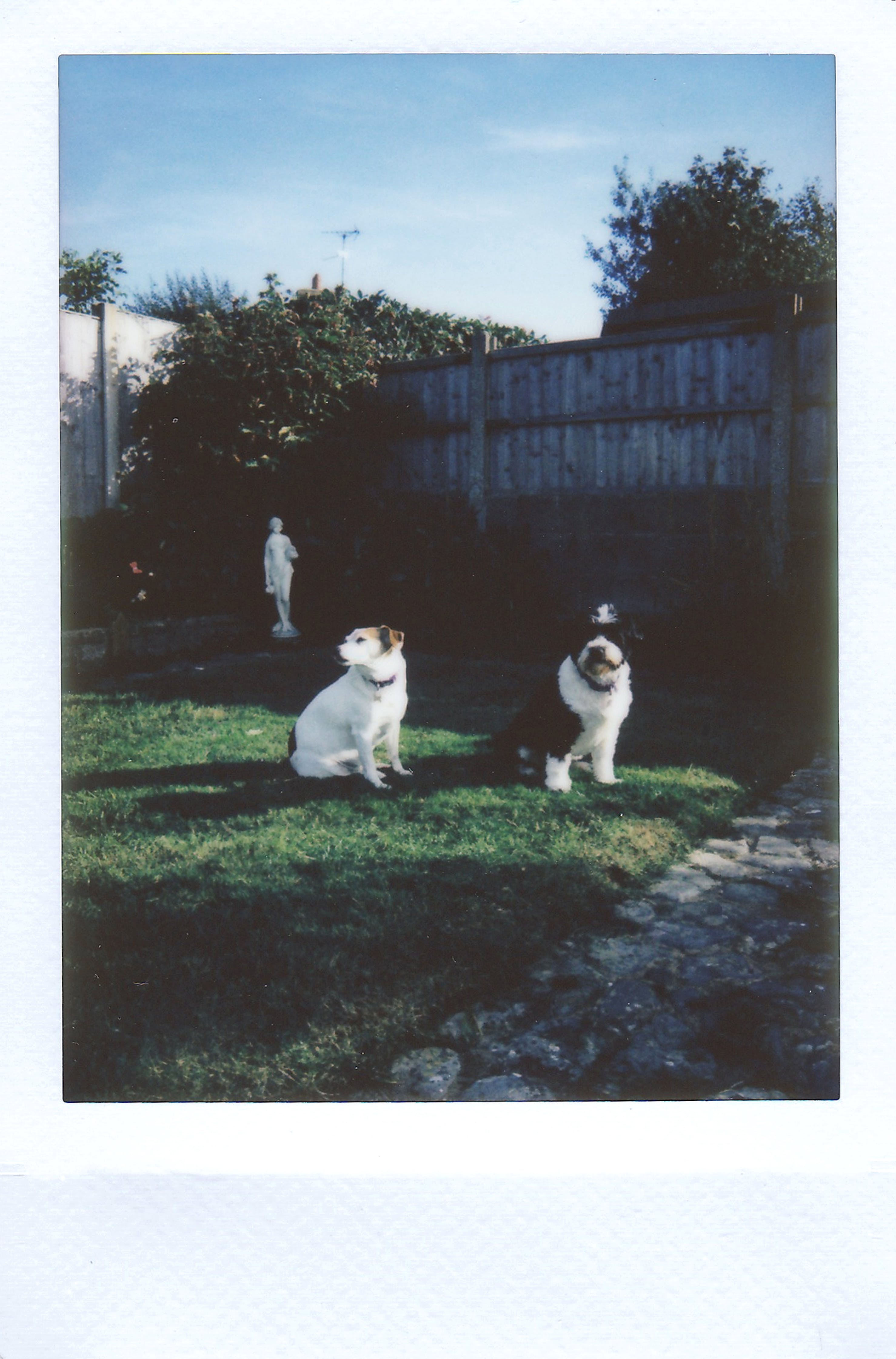 Two Dog Sitting on Lawn Grass Near Privacy Fence