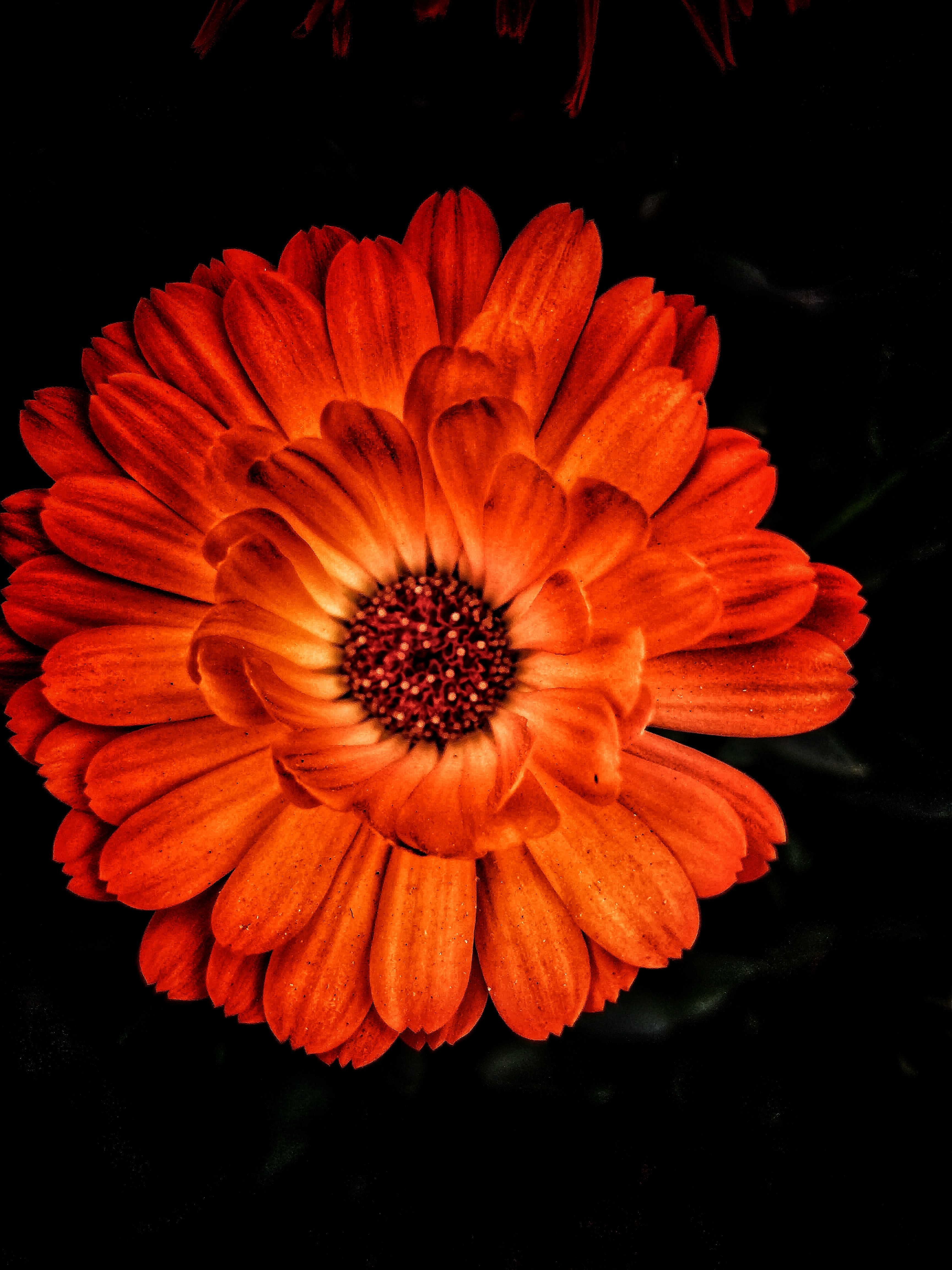 Free Stock Photo Of Beautiful Flowers Nature Photography Orange Color
