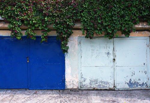 Základová fotografie zdarma na téma brána, břečťan, denní světlo, exteriér