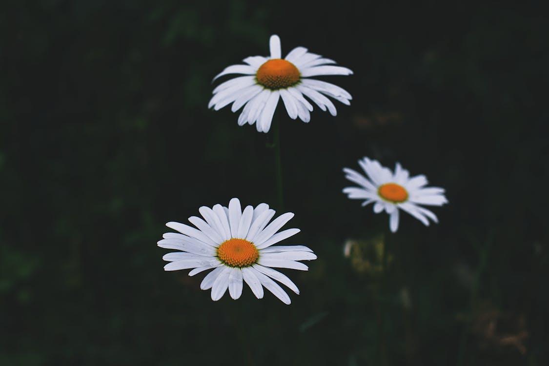 bitki örtüsü, bulanık arka plan, büyüme
