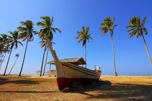 Kostnadsfri bild av gräs, havsområde, havsstrand, himmel