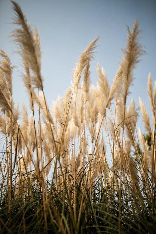 Ilmainen kuvapankkikuva tunnisteilla kasvikunta, kasvit, kasvu, kukat