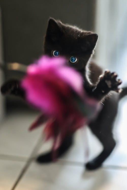Черный котенок стоя