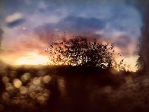 Ảnh lưu trữ miễn phí về bầu trời đầy kịch tính, bình Minh, cây trần, giọt nước