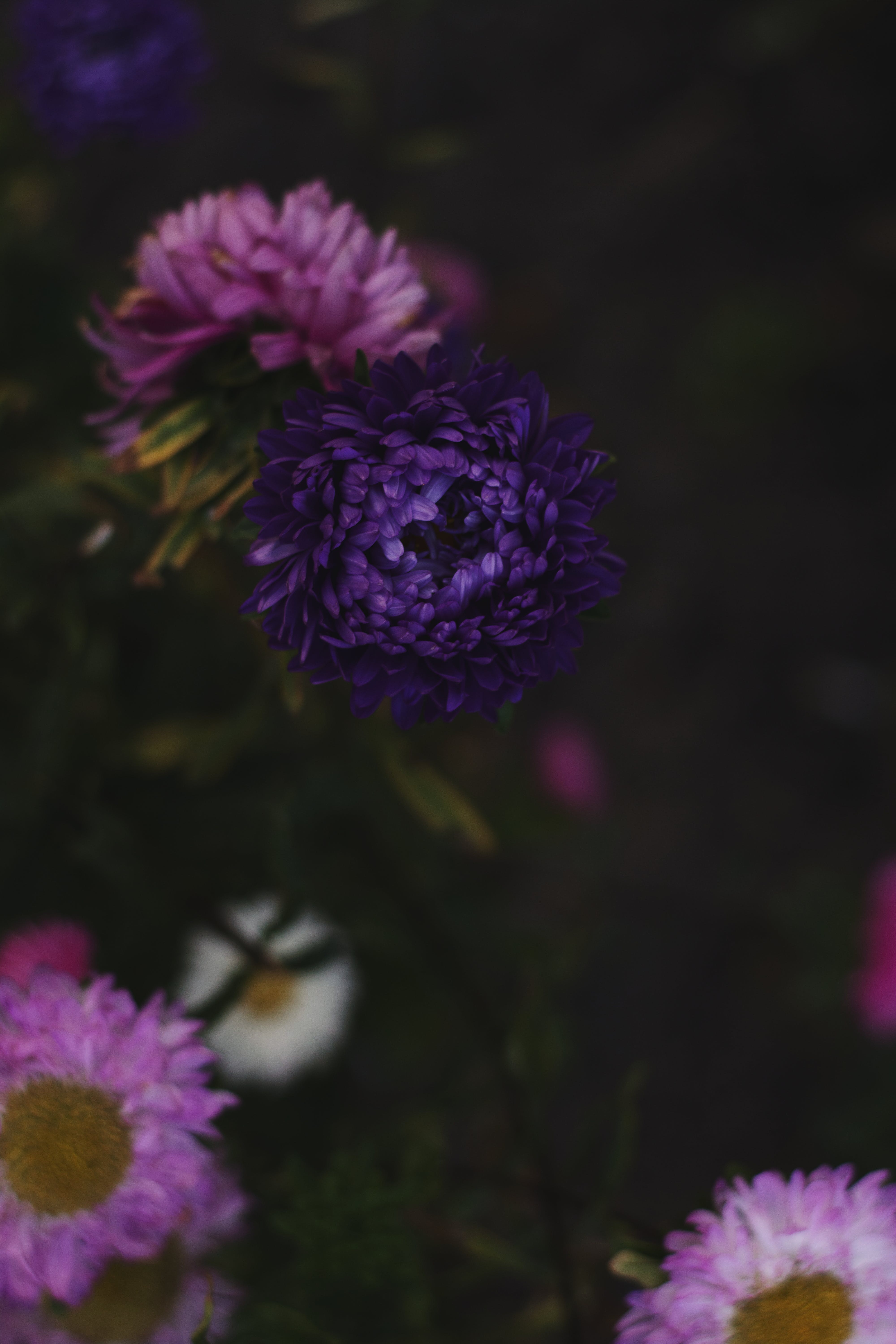 Close Up Photo of Purple and Pink Flowers