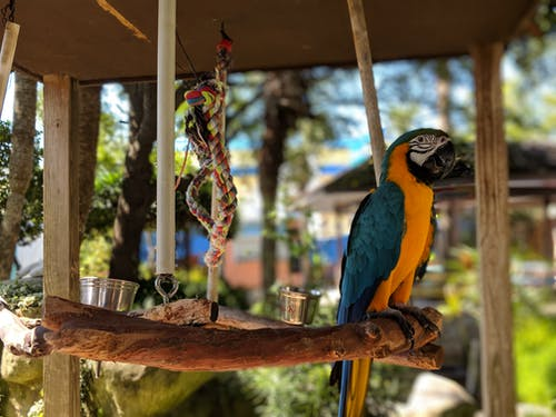 Selective Focus Photo of Blue and Orange Parrot