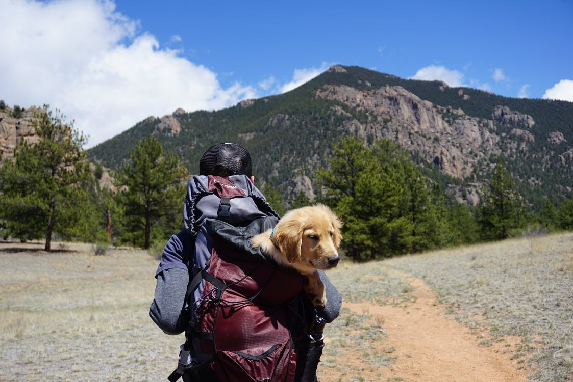 Person Carrying Yellow Labrador Retriever Puppy Inside Bag While Walked on Pathway in Front of Mountain