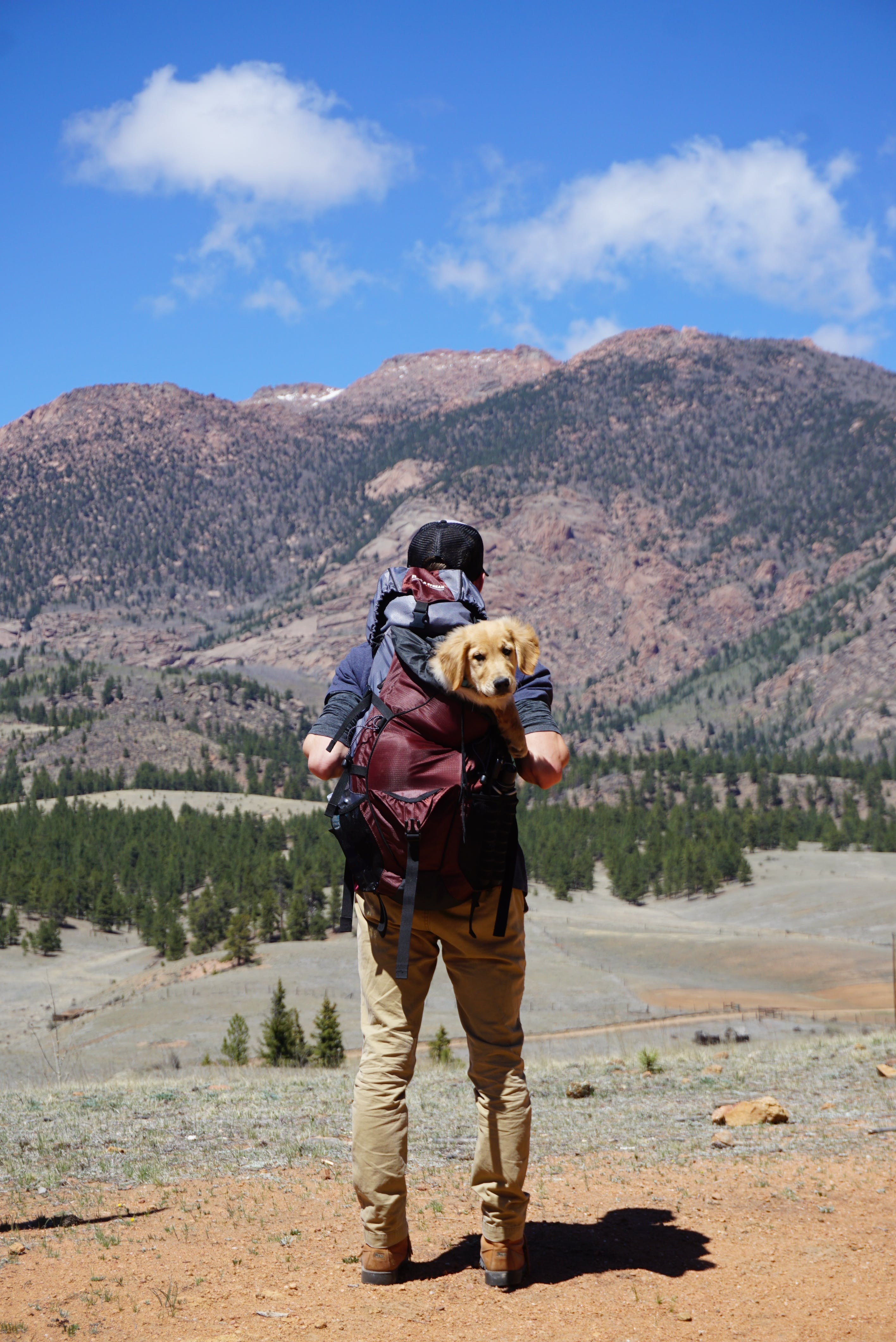 Person Carrying Red Backpack With Yellow Labrador Retriever Puppy Walking to the Forest