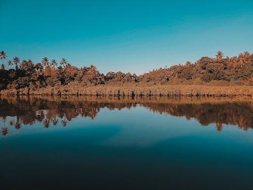 Imagine de stoc gratuită din apă, arbori, cer, cer albastru