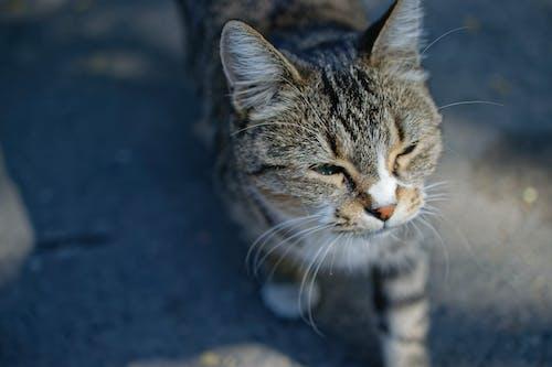 Gray Tabby Cat Shallow Focus Photography