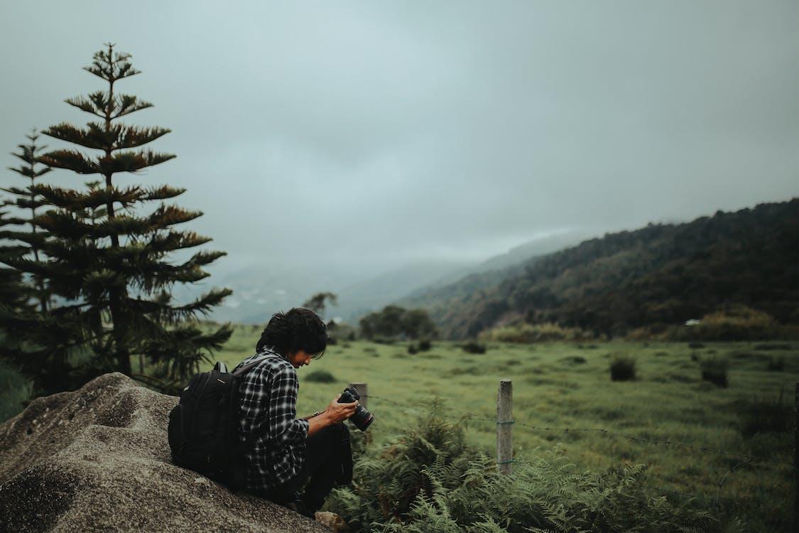 aparat de fotografiat, aparat foto, arbori