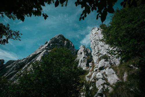 Foto profissional grátis de alto, árvore, aventura, caminhar